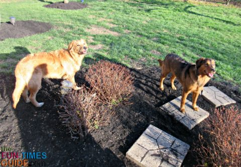 Do you know what the dog safe mulches are?