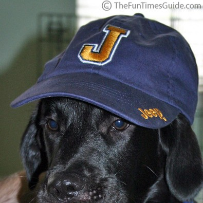 jeep-dog-hat.jpg