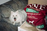 Jersey posing next to his big bag of Purina dogfood.