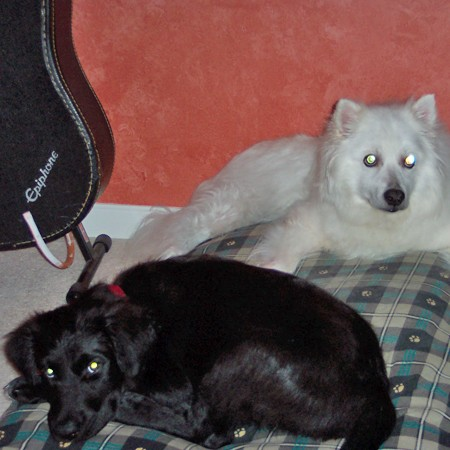 Jersey and Destin on the dog pillow.