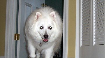 Senior Dog Tips ~ How To Prolong Your Dog's Life