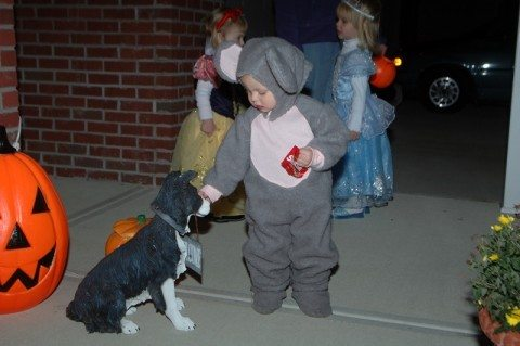You have to watch closely... because kids could unknowingly give your dog a piece of candy that is dangerous for dogs!