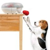 kong-time-dispenser-for-dogs.jpg