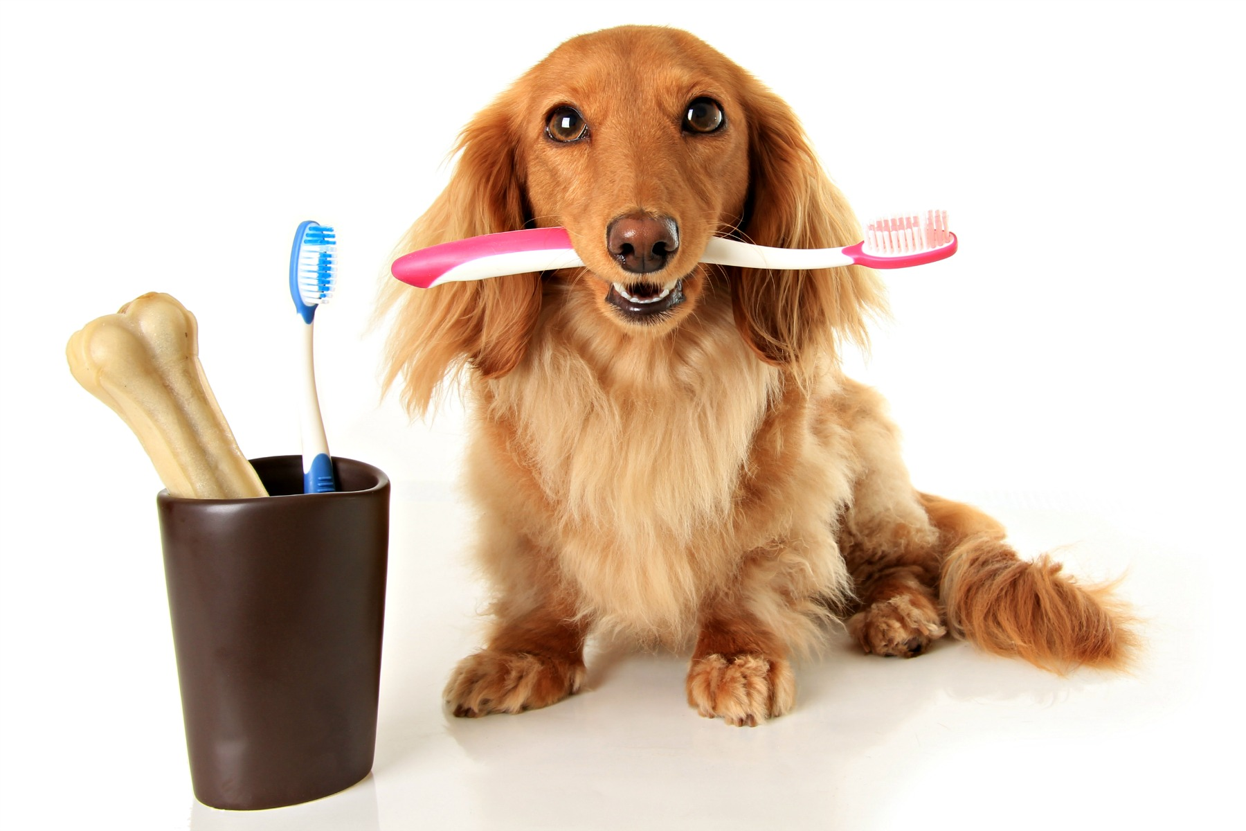 Each of the long lasting dog chews listed above effectively serves as a toothbrush for your dog!