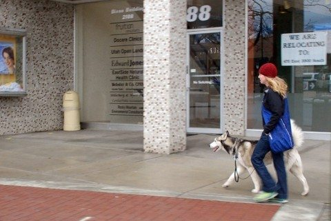 loose-leash-walking-by-Edgar-Zuniga-Jr.jpg