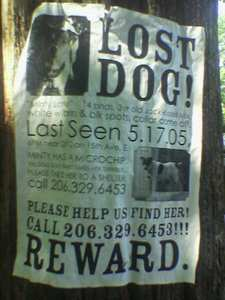 lost-dog-poster-by-goldberg.jpg
