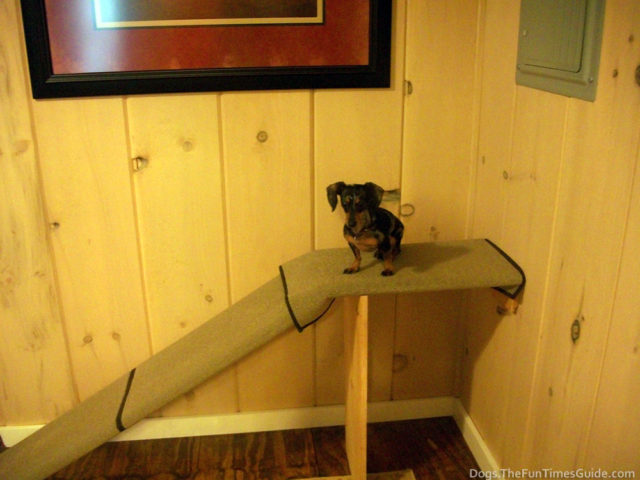 doggie ramps how to make