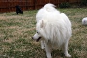 male-dog-jersey-watches-male-puppy-peeing.jpg
