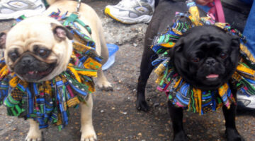 Mardi Gras for Dogs = Muddi Gras! Tips For Dealing With Muddy Paws