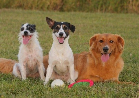 mixed-breed-dog-names