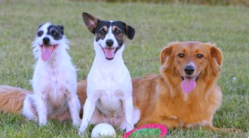List Of Hybrid Dogs & Their Unusual Mixed Breed Names