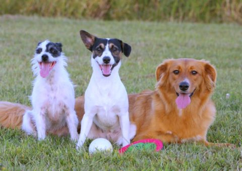 Mixed breed dogs are the best! Wondering what to call your hybrid dog that's mixed with 2 or more breeds? Here's a good place to start.