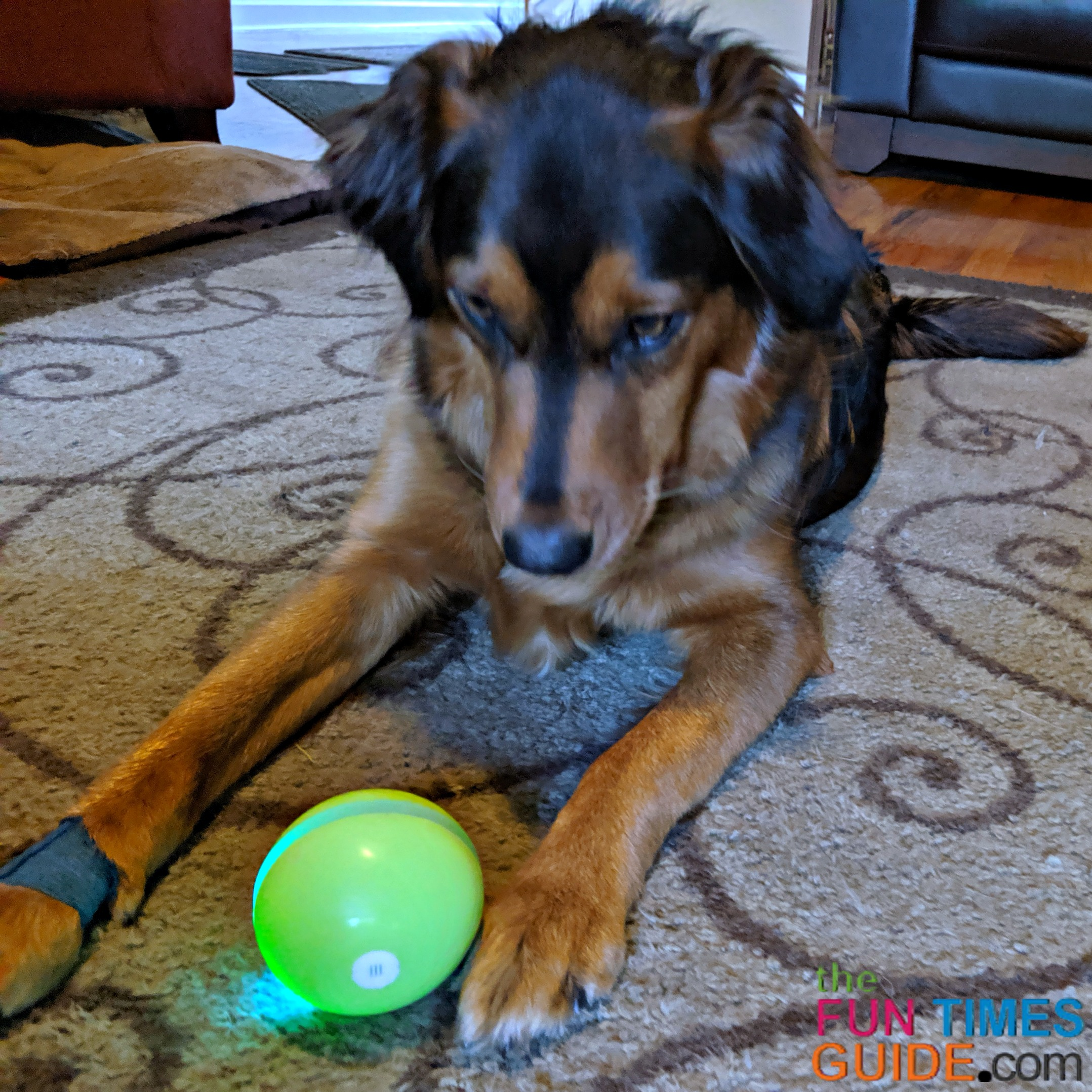 My dog Harley enjoys playing with the Wicked Ball the most.