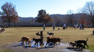 Top 10 Dog Parks In The U.S. + Tips Before Taking Your Dog To A Dog Park