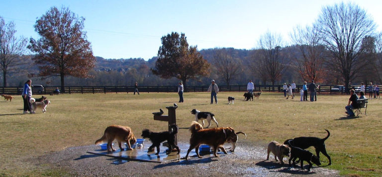 Off Leash Dog Park Knoxville