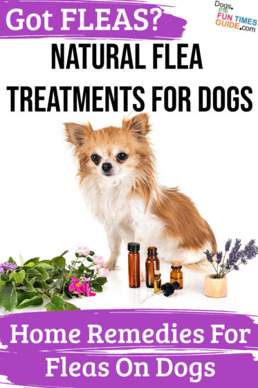 Natural home remedies for dogs
