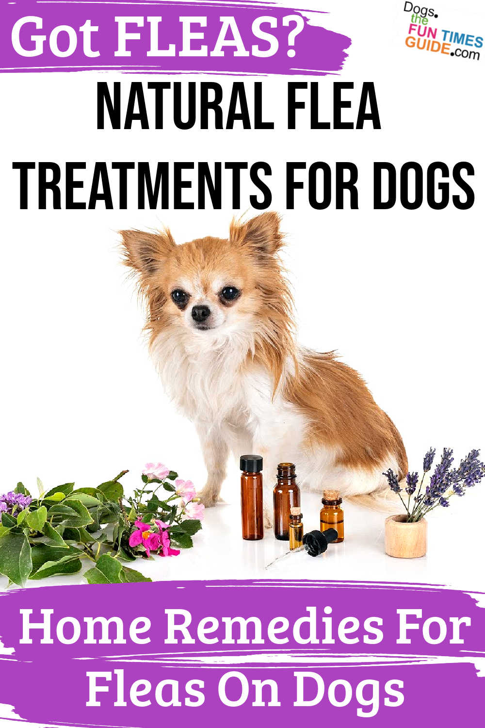 Best Home Remedies For Fleas On Dogs: Which Natural Flea Treatment For Dogs Is Your Favorite?