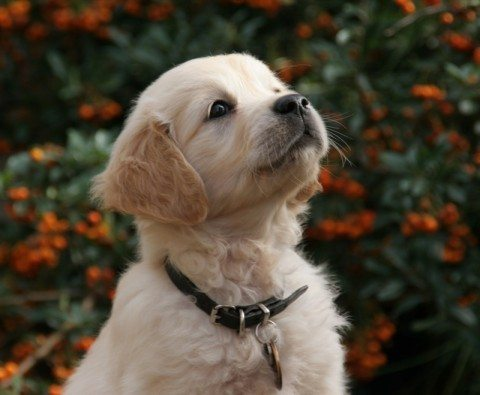 new-puppy-by-Georges-Photos.jpg