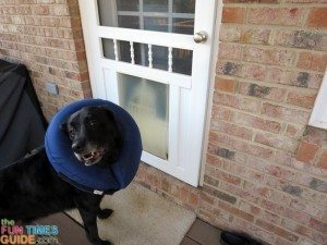 no-doggie-door-with-inflatable-dog-collar-on