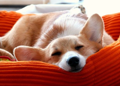 Here are some ideas for no sew pillows and no sew dog beds.