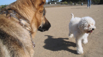 5 Tips Before You Go To An Off Leash Dog Park For The First Time