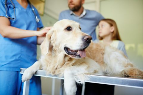 Here's how to find organizations that help with vet bills.