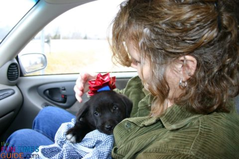 We picked Tenor out of the litter (or rather he picked us), and we took him home right after Christmas... so he was like our Christmas puppy.