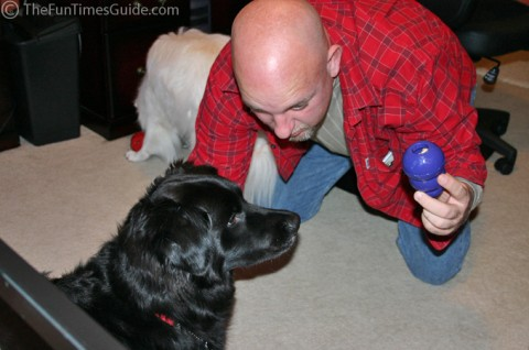 Our dogs love stuffed Kongs. Here, my husband is presenting one to our dog Destin.