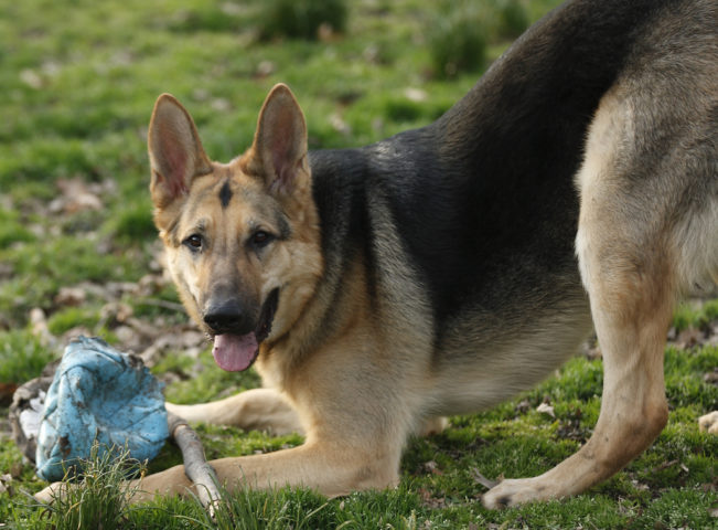 Yard Toys For Dogs : How to dog proof your yard things you should do right