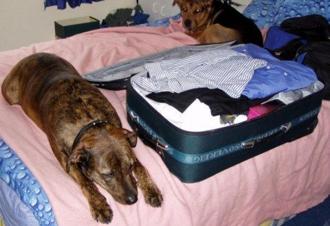 packing-with-dogs-snappy2006.jpg
