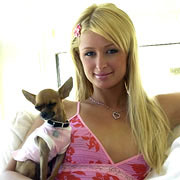 News About Paris Hilton And Her Dog Tinkerbell