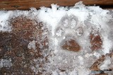 Our dog's paw print in the snow & ice on the back step.