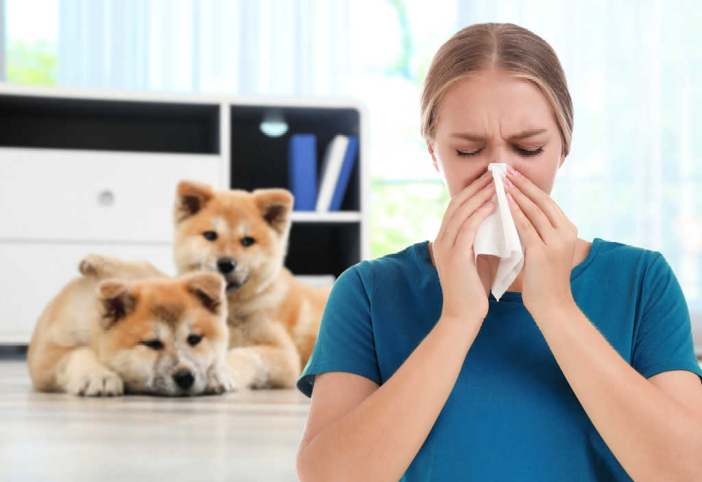 Just because you have pet allergies doesn't mean you can't get a dog. See the top 19 Hypoallergenic Dogs List!