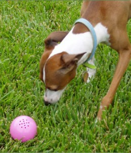 petqwerks dog babble ball