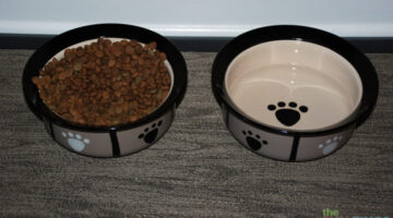My Favorite Pet Bowls For Dog Food & Water: They're Stylish, Affordable And Durable!