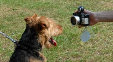 Want Better Dog Photos? The Best Dog Photography Tips For Dog Owners