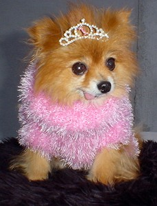 pomeranian-princess-dog.jpg