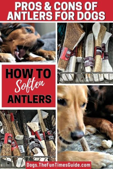 See all of the pros and cons of giving your dog antlers to chew on.