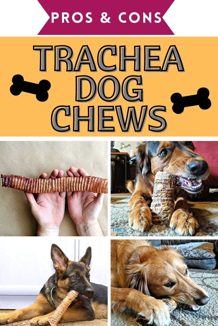 Beef Trachea Dog Chews: Our Favorite Brands + What You Need To Know Before Giving Trachea Chews To Your Dog!
