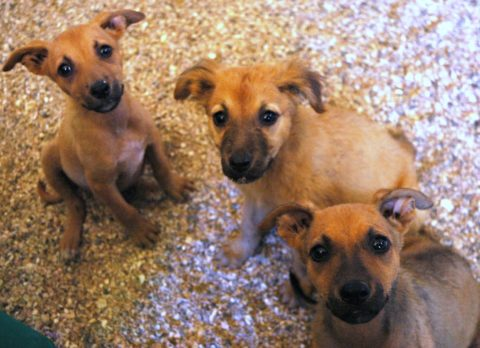 puppy parvo is real - these puppies are being treated for parvo
