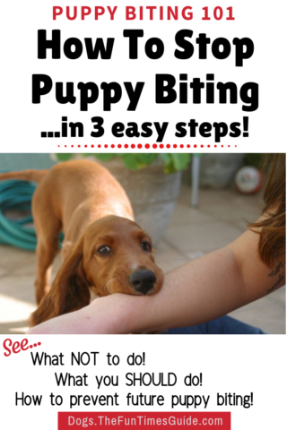 How to stop puppy biting and puppy nipping