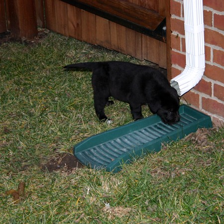 puppy-drinking-out-of-rain-gutter.jpg