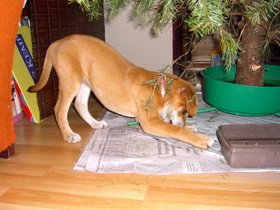 puppy-gets-into-christmas-tree-water-by-billac.jpg