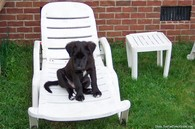 puppy-on-lawn-chair.jpg