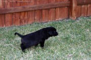 puppy-peeing-outside2.jpg