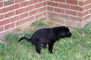 puppy-pooping-outside.jpg