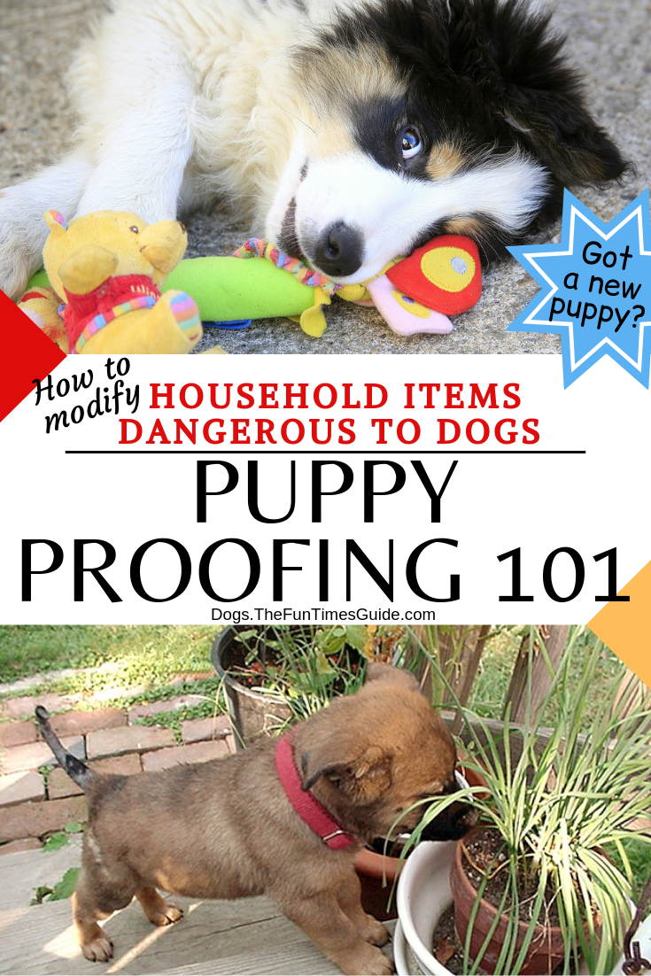 Puppy Proofing 101: Things You Need To Do Right Away To Make Your Dog's World Safer!