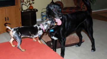 Boy Meets Girl… Playmate Pups Meeting For The First Time