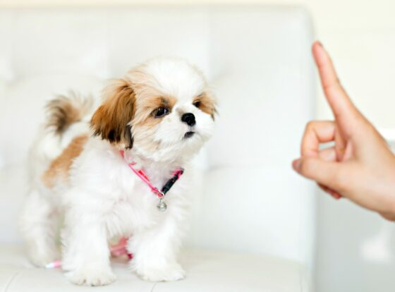 How do you train an 8 week old puppy? By starting with these 5 basic dog commands that puppies can understand and learn quickly.