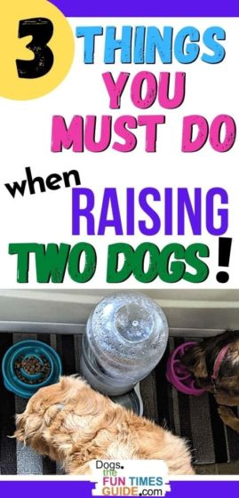 3 things you must do when raising two dogs together